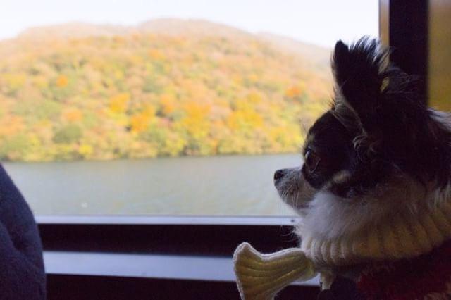 犬と秋に行きたい紅葉が楽しめるお出かけスポット神奈川県にある箱根