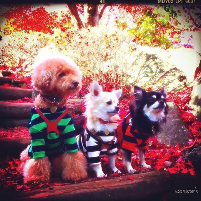 犬と秋に行きたい紅葉が楽しめるお出かけスポットの群馬県の桜山公園