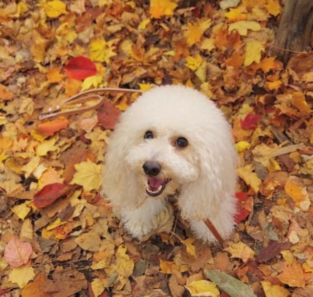 犬と秋に行きたい紅葉が楽しめるお出かけスポット北海道札幌市にある定山渓・豊平川