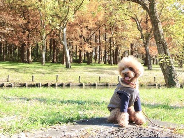 犬と秋に行きたい紅葉が楽しめるお出かけスポット東京都にある水元公園