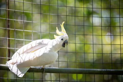 オウムの放鳥に関する注意点