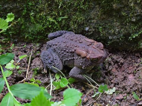 Toads2