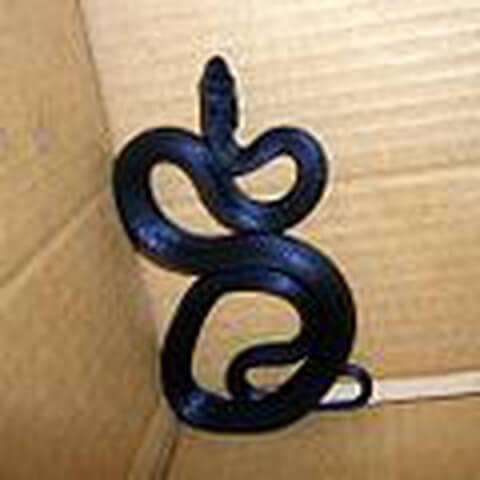 カラスヘビ(シマヘビ)