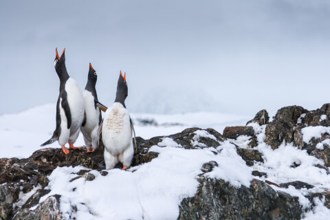 ペンギンの飼い方、生態、特徴、種類、水族館