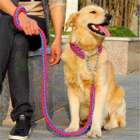 mastiff-leash