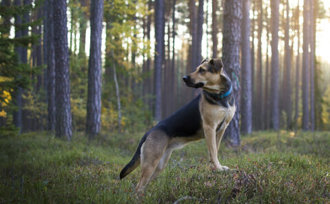 huntingdog2