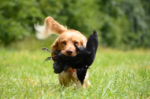 huntingdog1