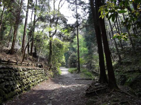 林の木陰の道