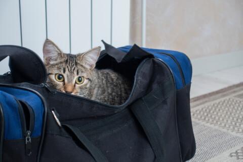 猫のおすすめキャリーバッグ