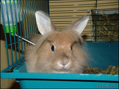 angora_in_cage