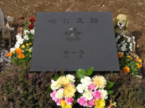 animal_cemetery