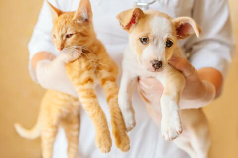 動物病院 準備 注意点 費用 猫 犬 入院