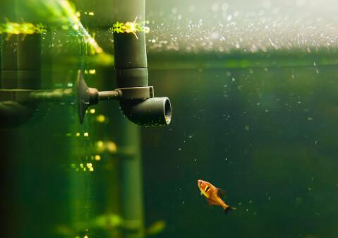 熱帯魚 飼い方 簡単 初心者 水 アクアリウム