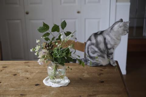 花と猫の後ろ姿