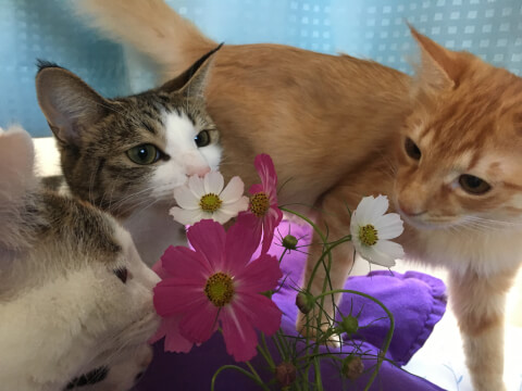 3匹の猫と花