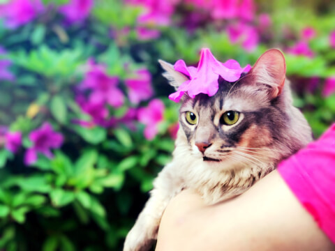 花をかぶる猫