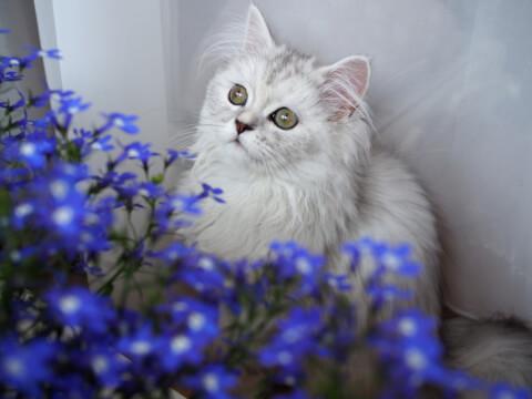 青い花と猫