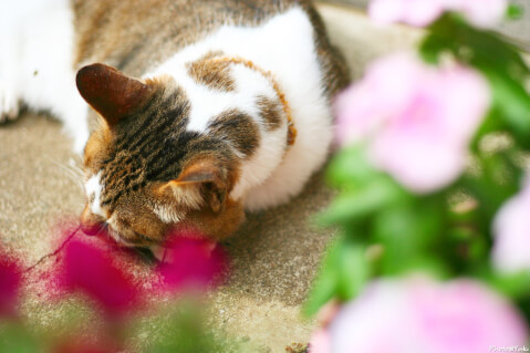 赤い花と猫