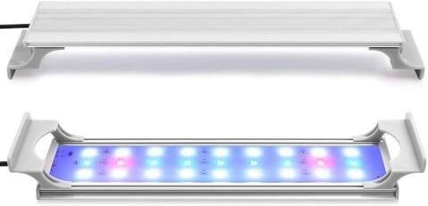 ヤマトヌマエビ 照明
