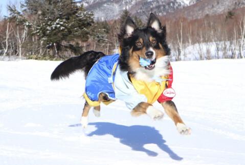 雪の上で走るオゥシー