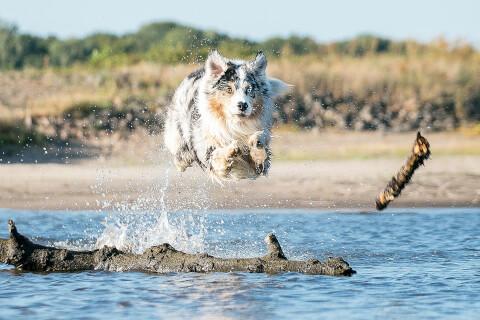 水の上でジャンプするオゥシー