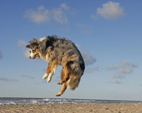 砂浜で飛び跳ねるオゥシー