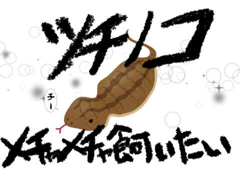 ペット ツチノコ アニマル エキゾチックアニマル 動物 都市伝説 生き物 蛇 ヘビ 飼育方法