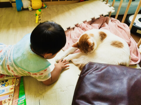 baby_and_cat