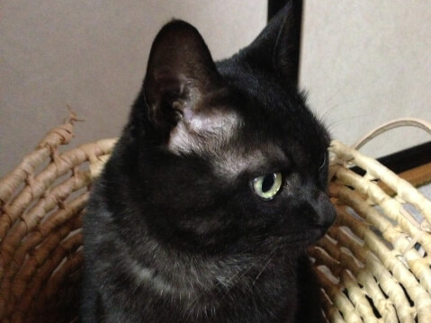 bald_black_cat