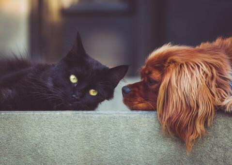 黒猫と茶色の犬