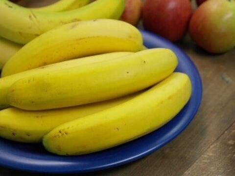 カブトムシ 寿命 卵 幼虫 メス オス 育て方 飼育 バナナ