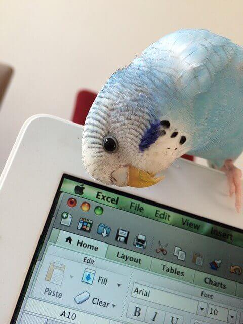 parakeet-phone