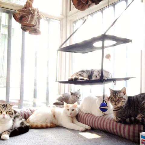 LS 猫ベッド キャットハンモック