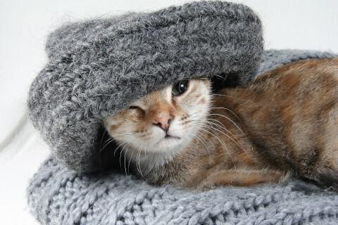セーターと猫