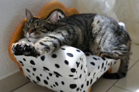 猫ベッド伸び