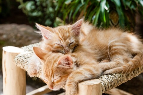 before_becoming_a_foster_parent_for_a_cat