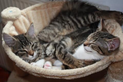 猫 鼻水 薬 透明 治療 治らない 病気