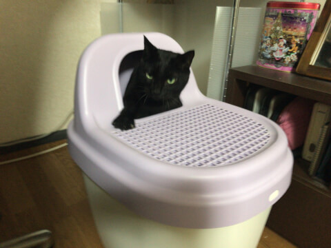 black_cat_in_toilet