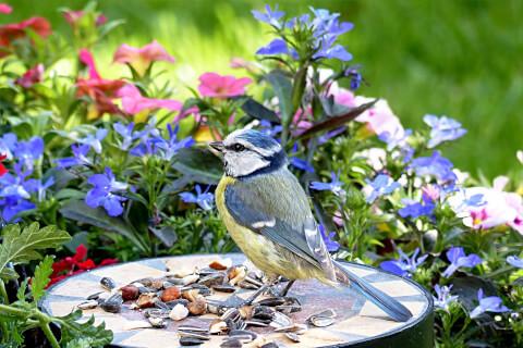 鳥 餌まとめ