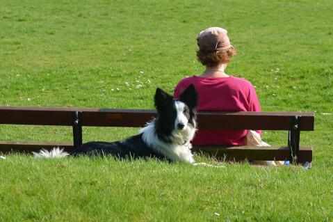 border-collie10