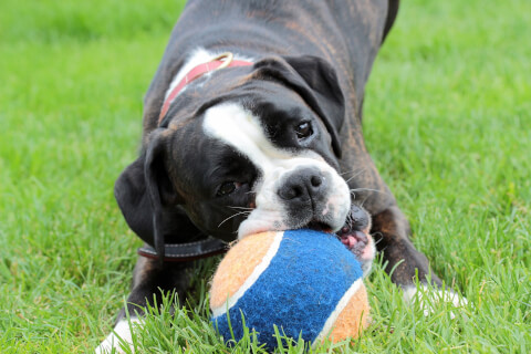 dog_with_ball