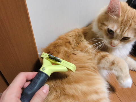 猫 ブラッシング ファーミネーター