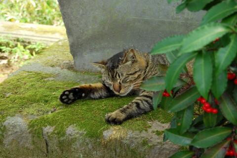 猫 集会 場所 意味 呼ばれる なぜ 鳴き声