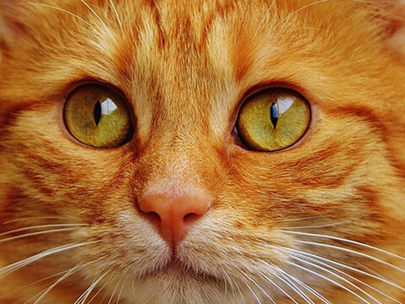 目指せ長寿猫!飼い猫といつまでも幸せに暮らす秘訣