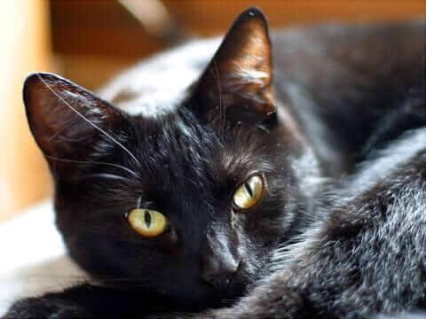 cat006