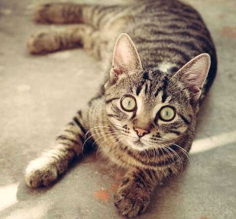 正面を見る猫・全身