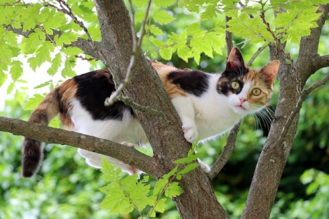 cat on the tree