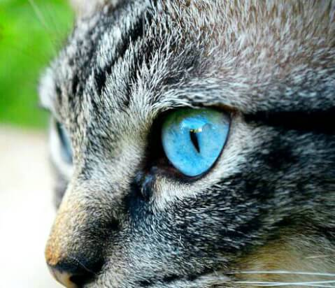 blue cat's eyes