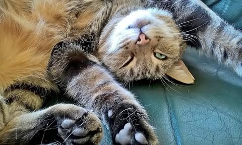 気持ち良さそうにしている猫