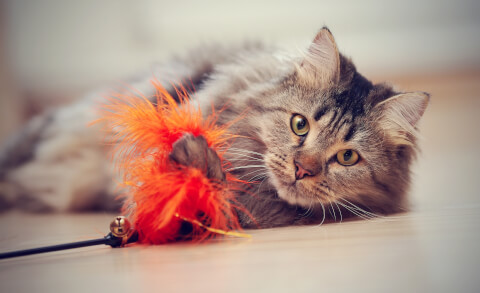 猫 おもちゃ おすすめ 人気